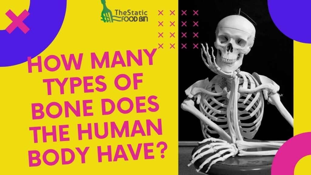 How many types of bone does the human body have
