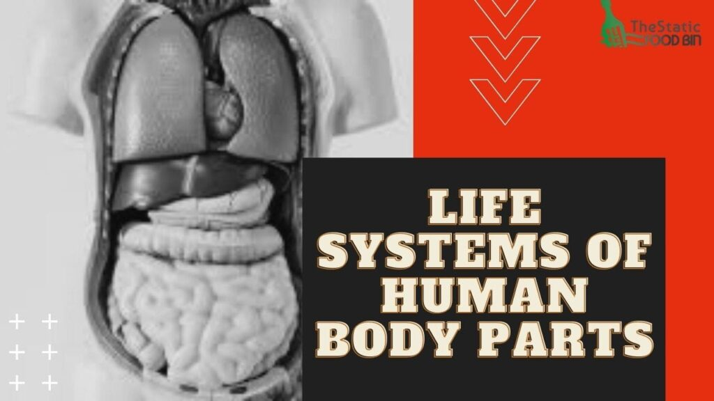 Life systems of Human body parts