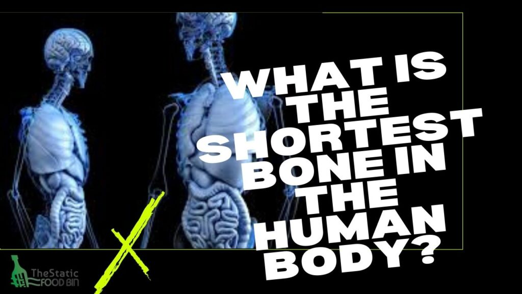 What is the shortest bone in the human body
