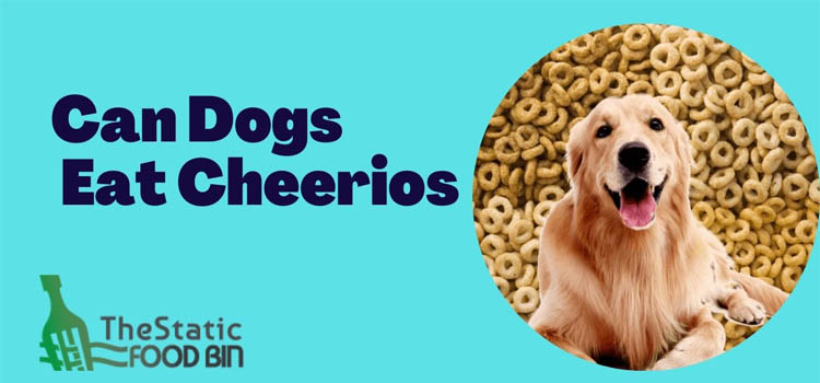 Can Dogs Eat Cheerios