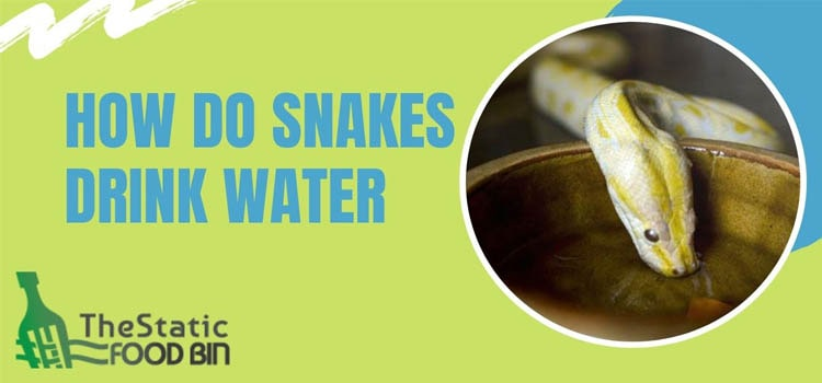 How Do Snakes Drink Water