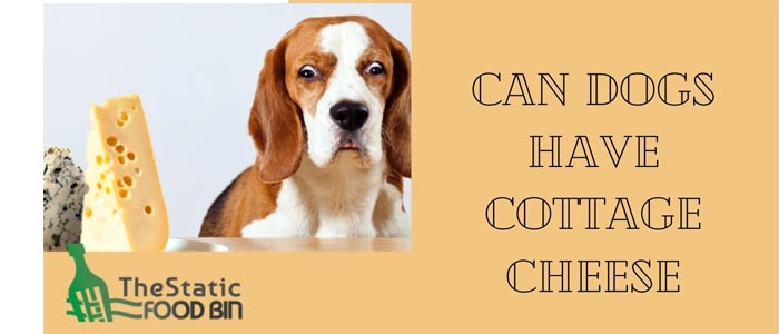Can Dogs Have Cottage Cheese