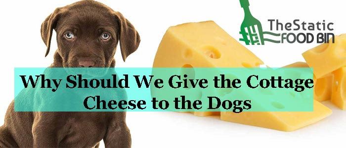 Why Should We Give the Cottage Cheese to the Dogs