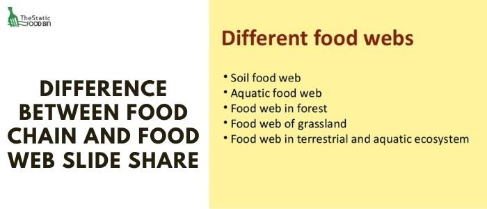 Difference between food chain and food web