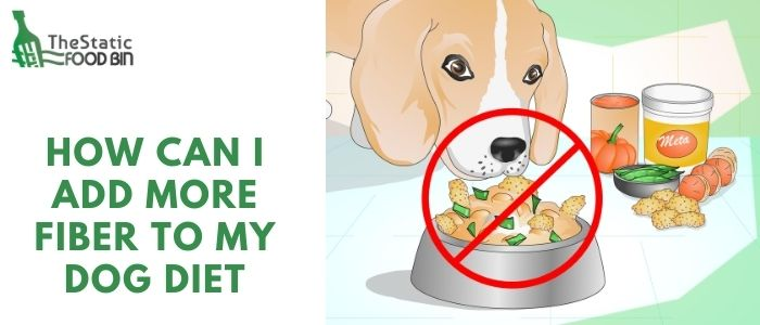 How can I add more fiber to my dog diet