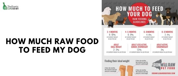 How much raw food to feed my dog